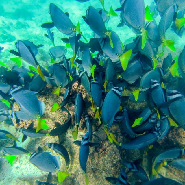 """Galapagos Islands School of Fish"" stock image"