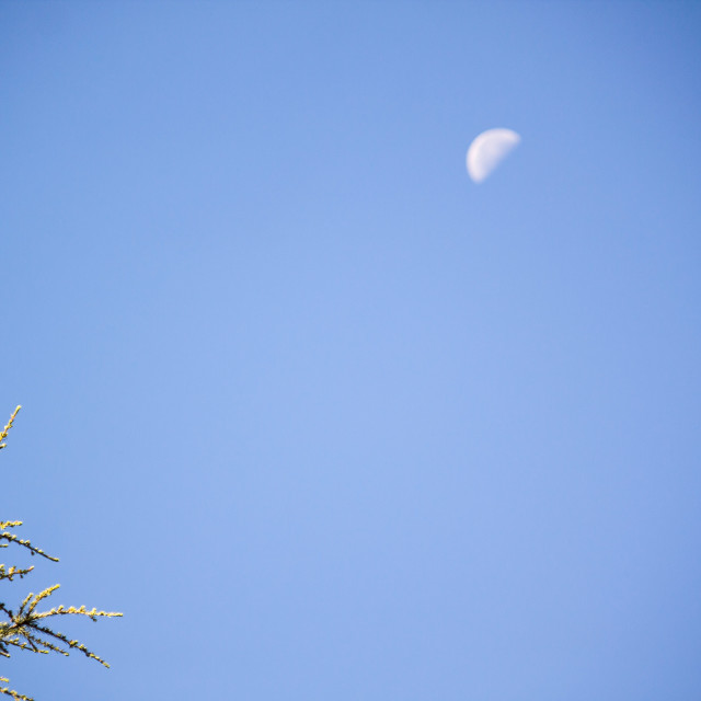 """morning moon against blue sky"" stock image"