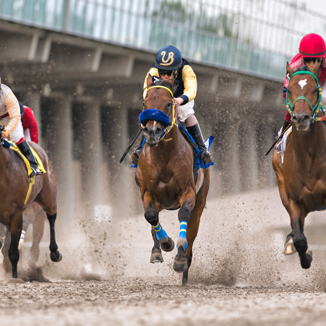 """Three horses race neck and neck at a horse racing track"" stock image"