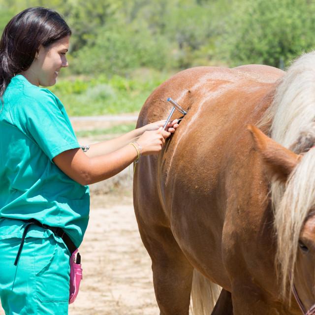 """""""Veterinary horses on the farm"""" stock image"""