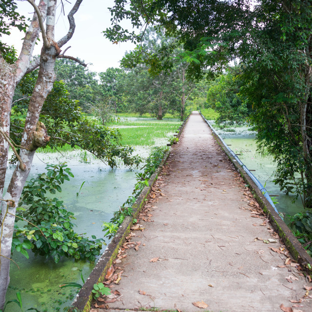 """Concrete Path through the Jungle"" stock image"