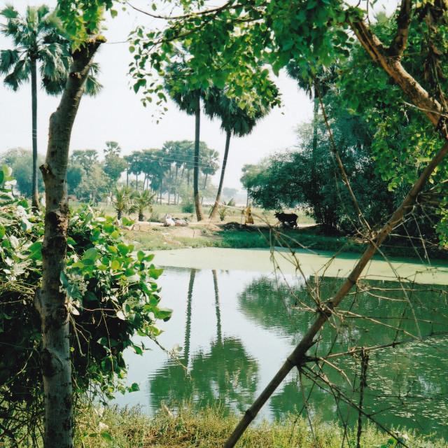 """The village pond"" stock image"