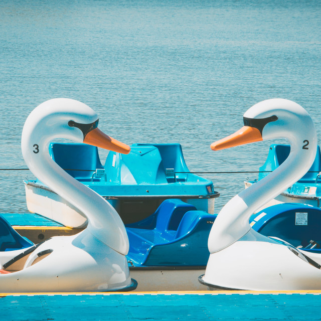 """Swan Paddle boats meet"" stock image"