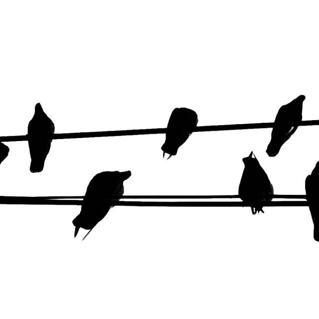 """Birds chatting"" stock image"