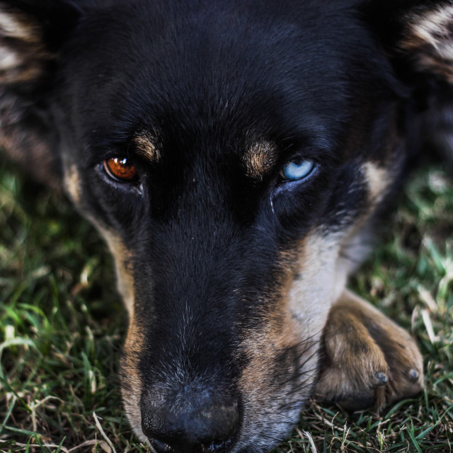 """""""A portrait of a stray dog"""" stock image"""