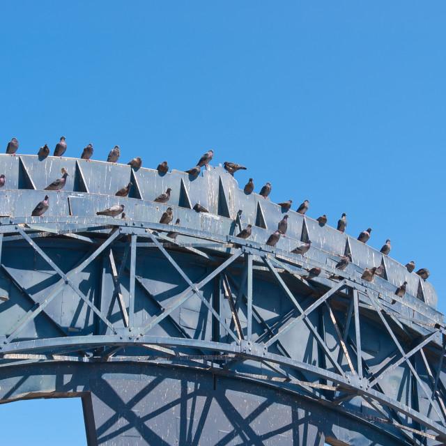 """Pigeons"" stock image"