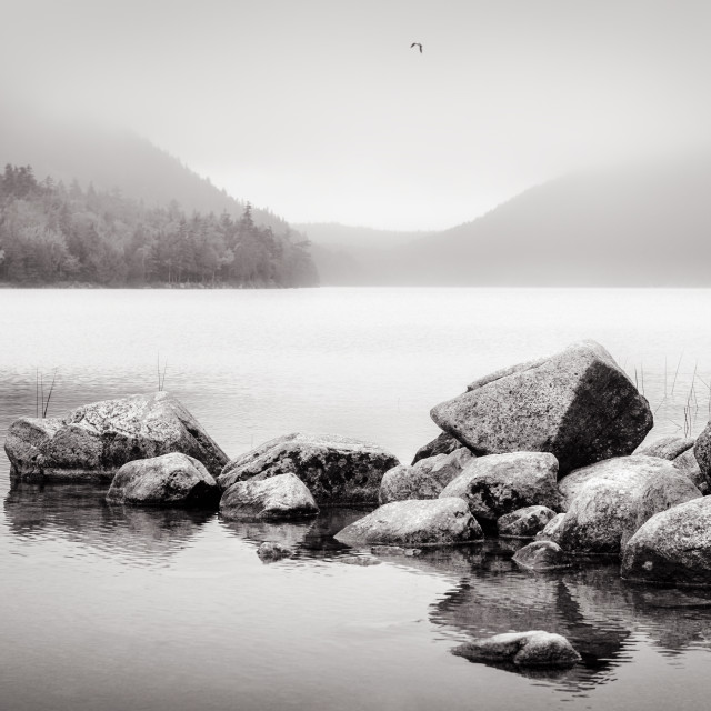 """Acadia National Park III 