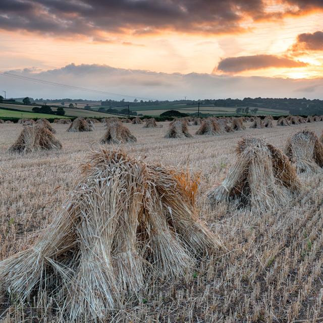 """""""Barley Harvest in Devon"""" stock image"""