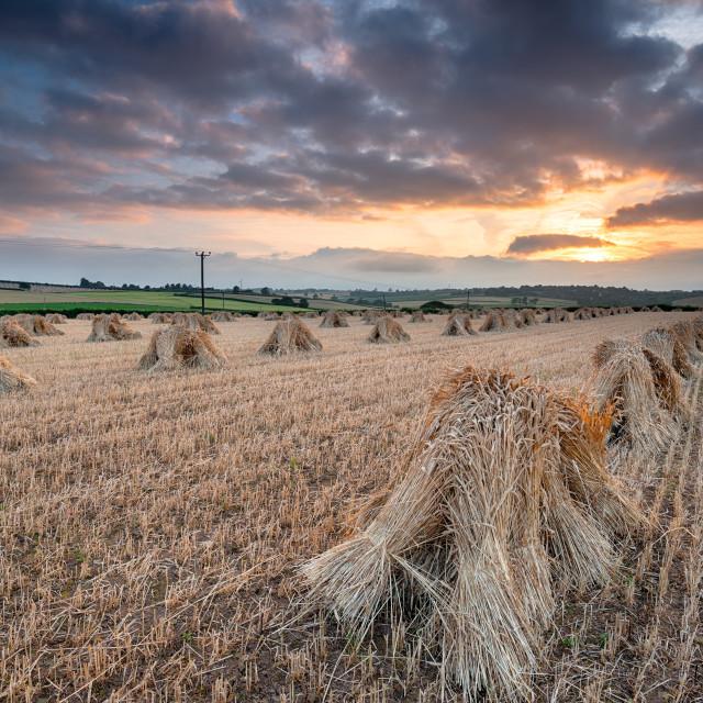 """""""Dramatic Harvest Sunset"""" stock image"""