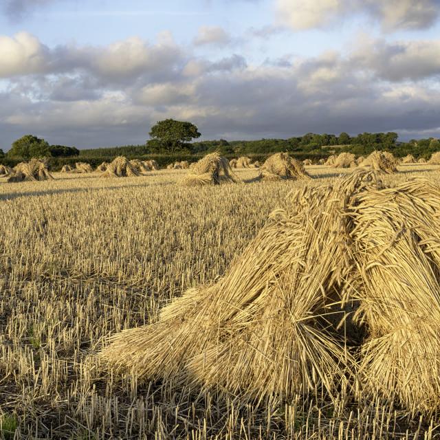 """Devonshire Harvest"" stock image"