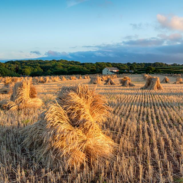 """""""Harvest Time in Devon"""" stock image"""