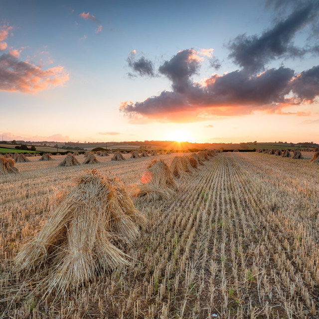 """Harvest Sunset"" stock image"