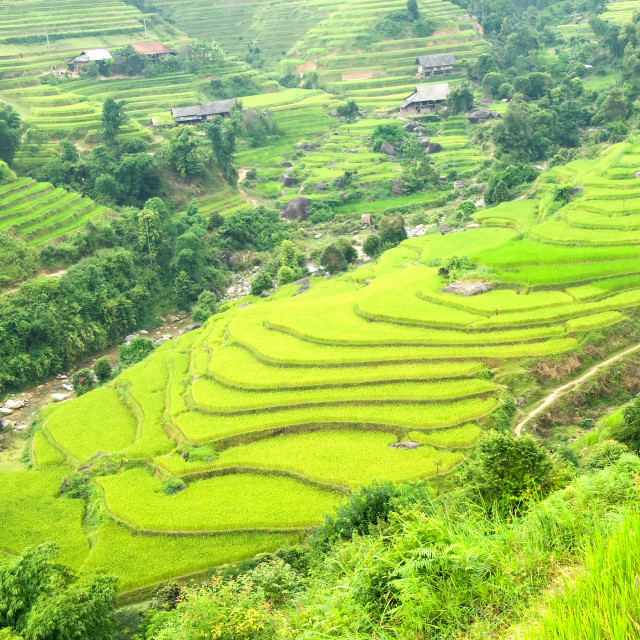 """Beautiful landscape Green Terraced Rice Field in Hoang Su Phi village, Hagiang, Vietnam"" stock image"