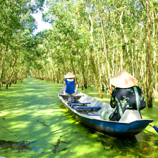 """Tra Su indigo forest, eco tourist area at Mekong Delta, Vietnam"" stock image"