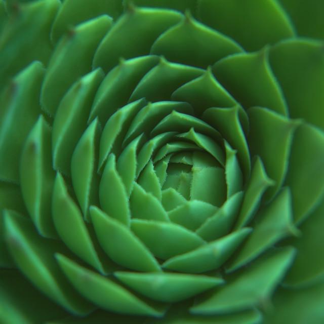 """Succulent Plant Center"" stock image"