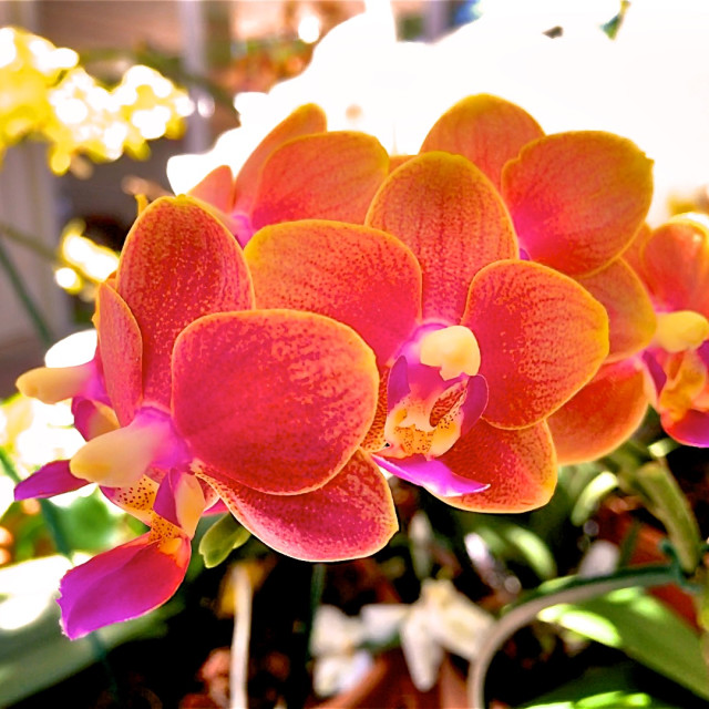 """April Orchids on a Saturday"" stock image"