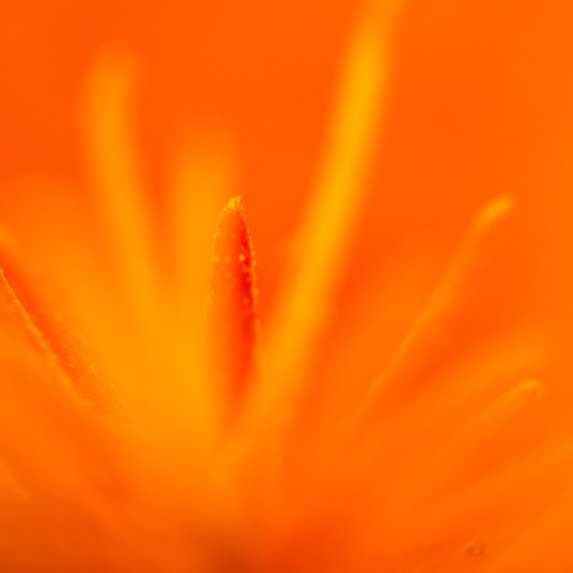 """Bright orange"" stock image"