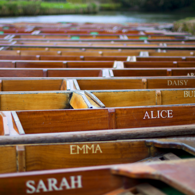 """Punts lined on the river Cam in Cambridge"" stock image"
