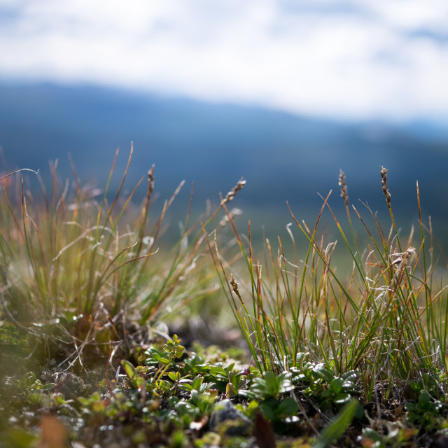 """Mountain vegetation"" stock image"