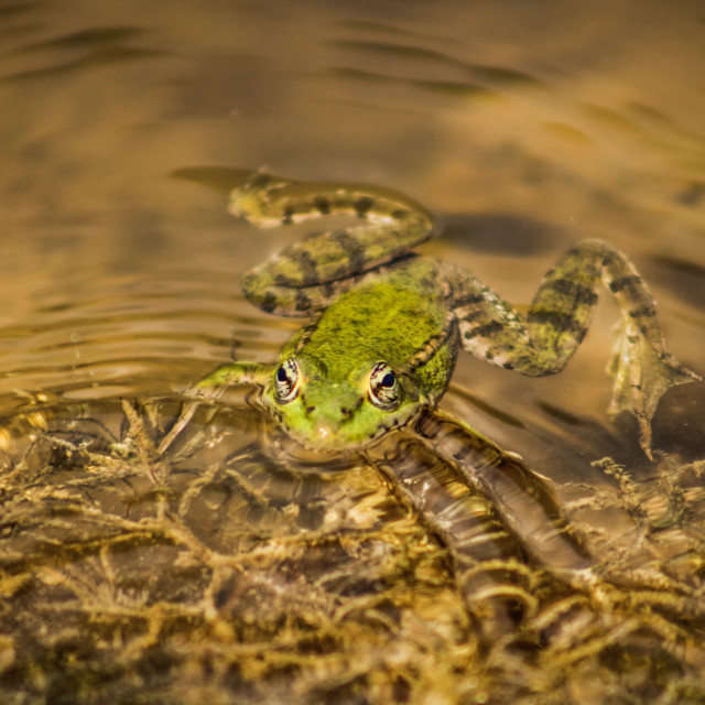 """""""A frog chilling"""" stock image"""