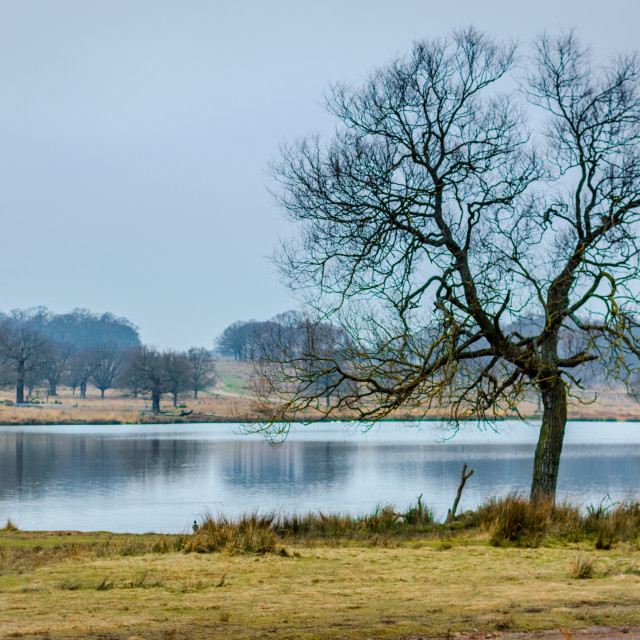"""Richmond Park in Winter"" stock image"