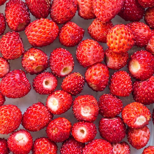 """Wild Strawberries"" stock image"