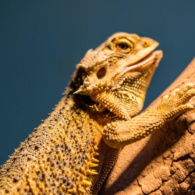 """Lizards crawling tree"" stock image"