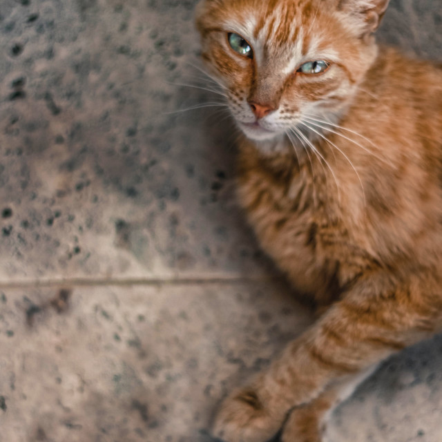 """""""A portrait of a stray cat"""" stock image"""