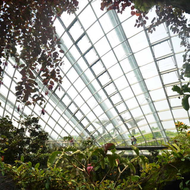 """""""Cloud Forest at Gardens by the Bay in Singapore"""" stock image"""