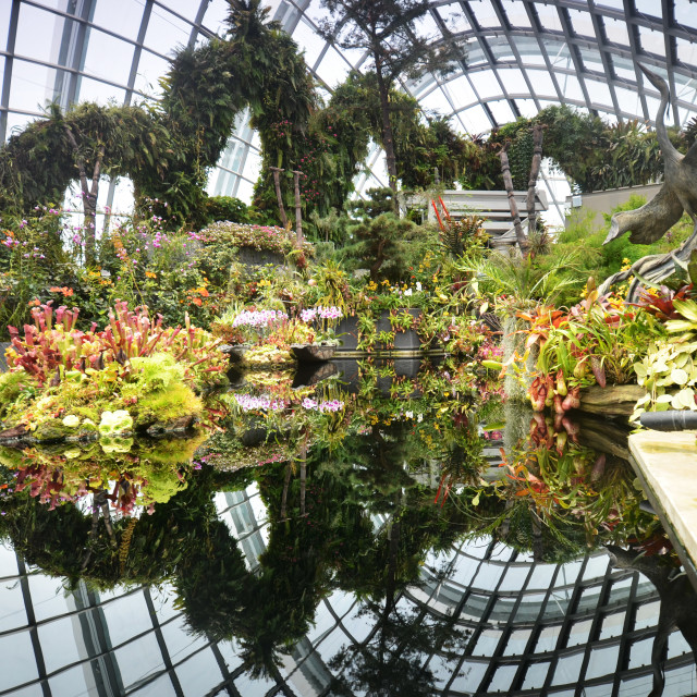 """""""View of Cloud Forest at Gardens by the Bay"""" stock image"""