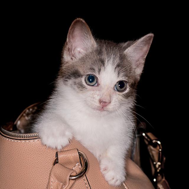 """""""Kitten"""" stock image"""