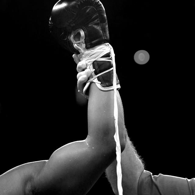 """""""Boxer Winner"""" stock image"""