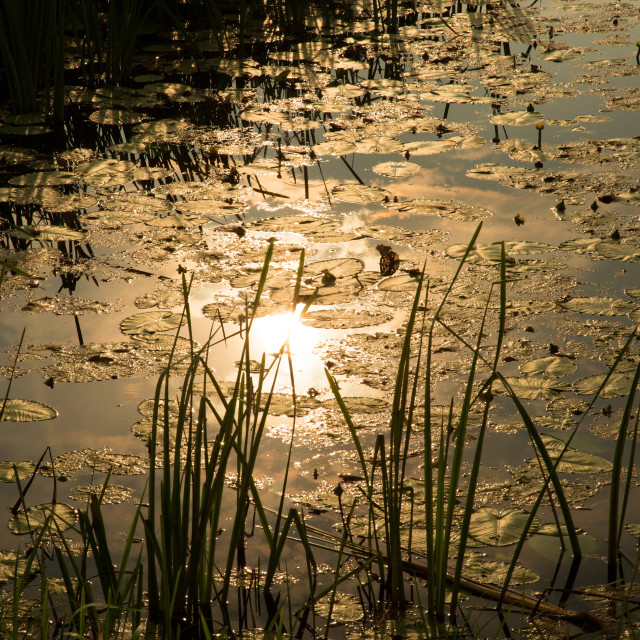 """""""Sun reflection in the water pond"""" stock image"""