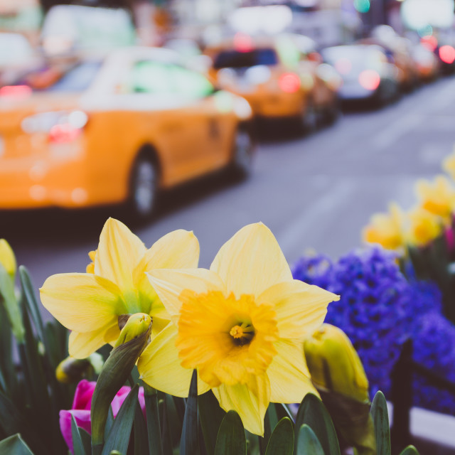 """""""Spring blooms in Times Square"""" stock image"""