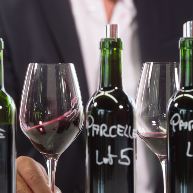 """""""Portrait confidant vintner drinking red wine in winery cellar"""" stock image"""