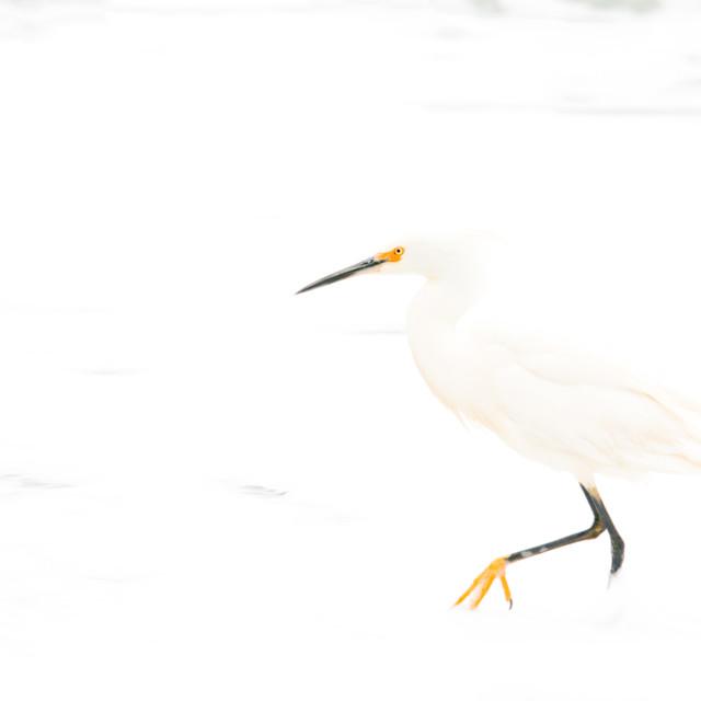 """""""Hollow Bird"""" stock image"""