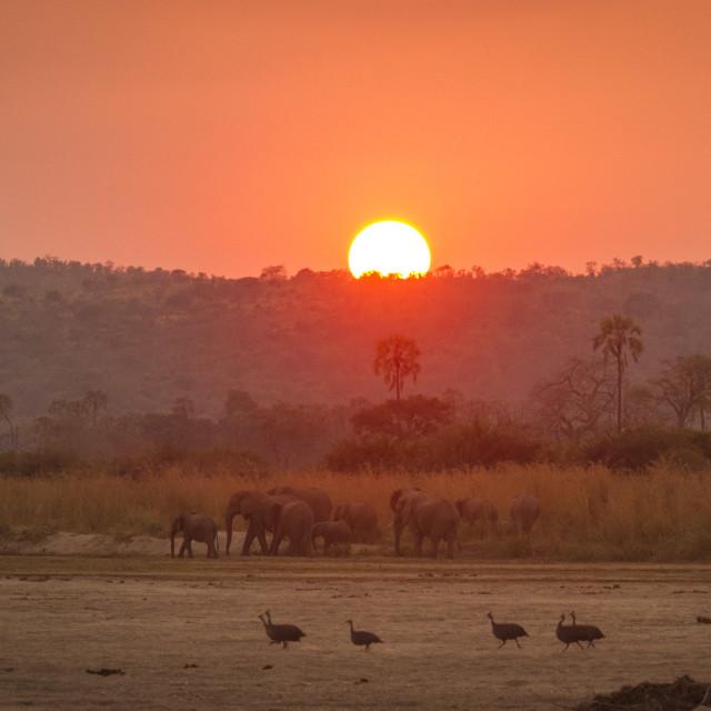 """Mwagusi river sunset"" stock image"