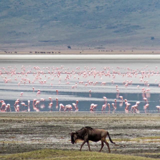 """""""Ngorongoro crater."""" stock image"""