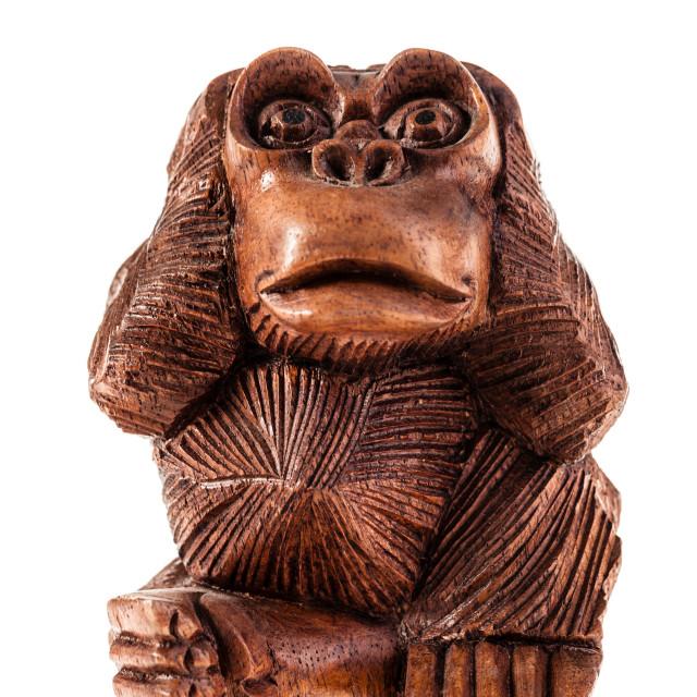 """""""Stupid monkey"""" stock image"""