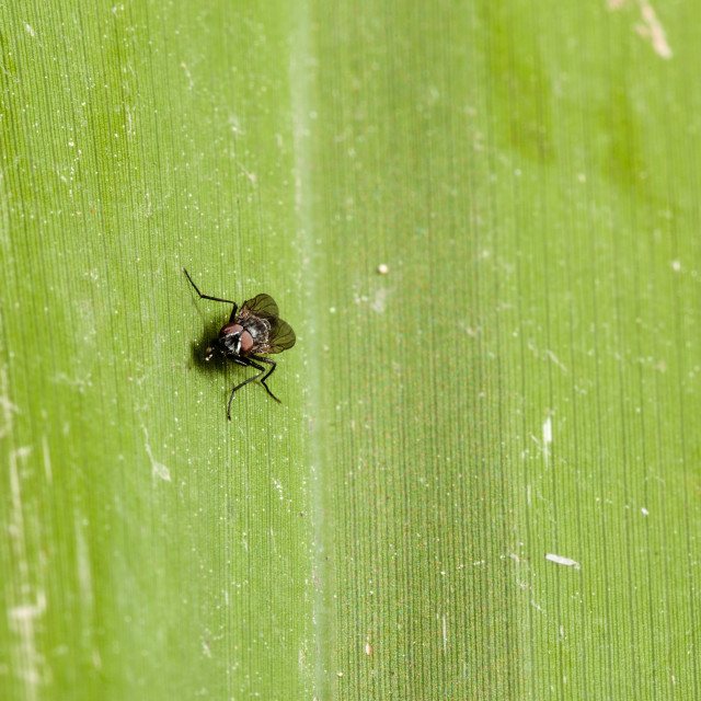 """""""Fly on green"""" stock image"""