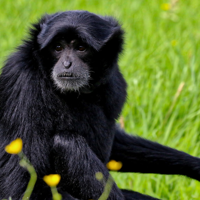 """Ape"" stock image"