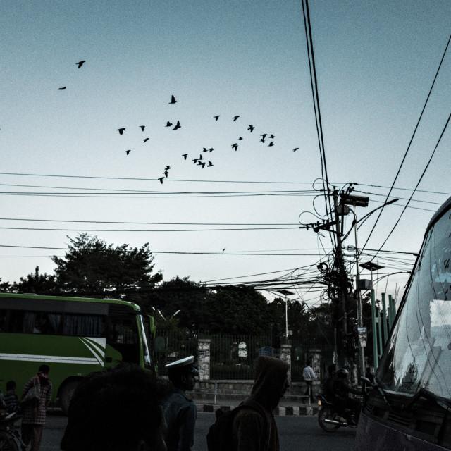 """""""Birds & Reflection"""" stock image"""