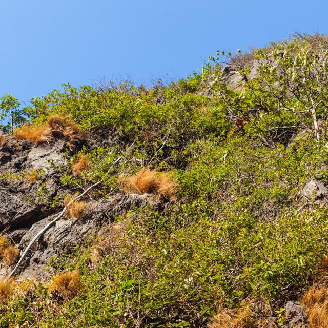 """Tropical vegetation"" stock image"