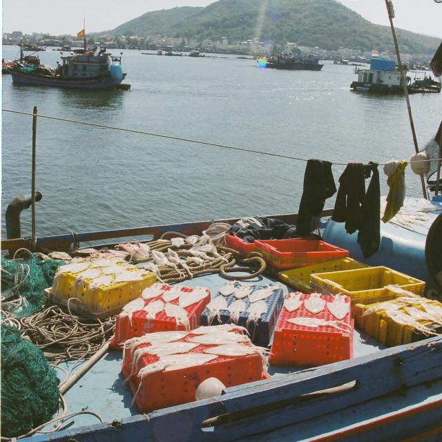 """""""Drying seafood"""" stock image"""