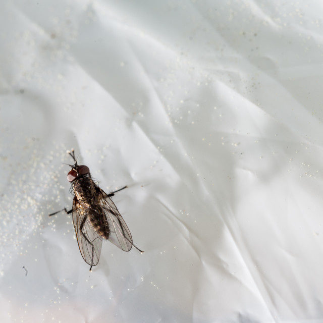 """""""fly on plastic"""" stock image"""
