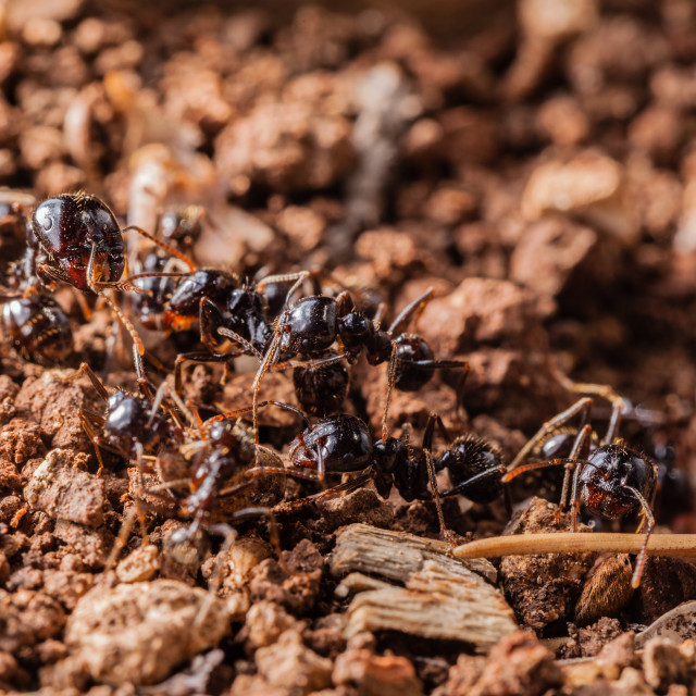 """Working ants"" stock image"