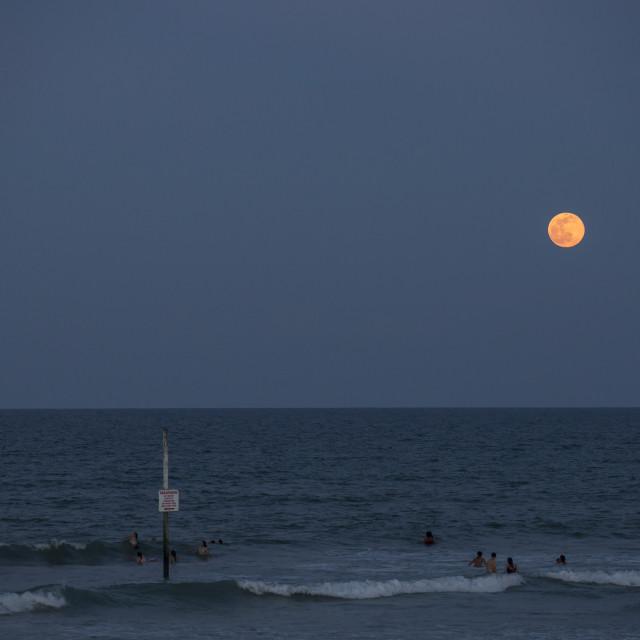 """Moonlight swim"" stock image"