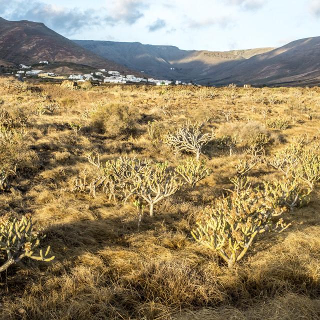 """Landscape in Lanzarote, Canary Islands, Spain"" stock image"