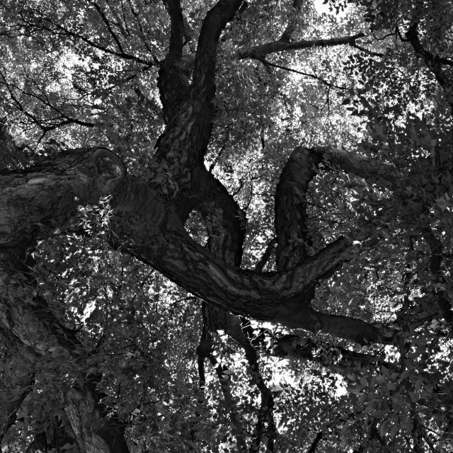 """""""Tree in Black and White"""" stock image"""