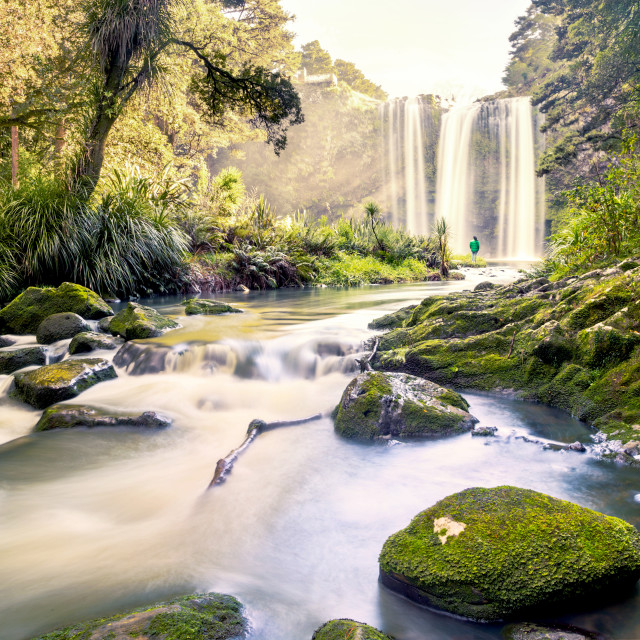 """Whangarei Falls, Northland, New Zealand"" stock image"
